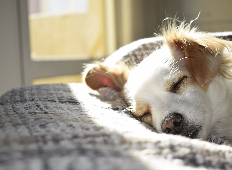 Dog asleep in the sun