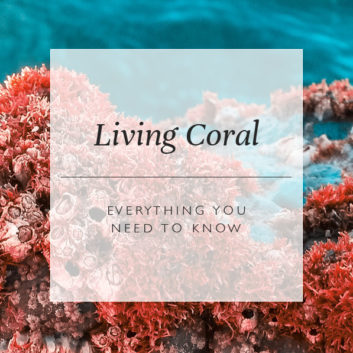 Living Coral: Everything You Need To Know About Colour Of The Year 2019 thumbnail