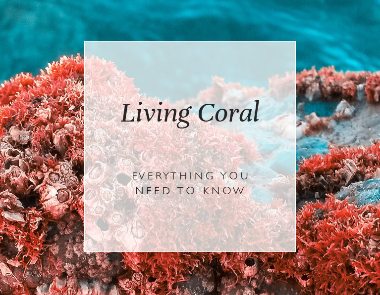 Living Coral: Everything You Need To Know About Colour Of The Year 2019