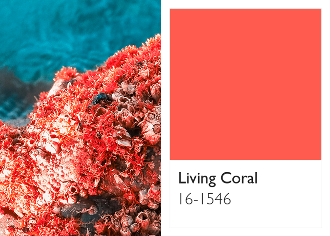 Living Coral sea, coral and swatch Pantone.